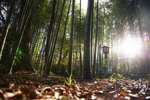 修善寺温泉の竹林の小径の写真素材 [FYI04866062]