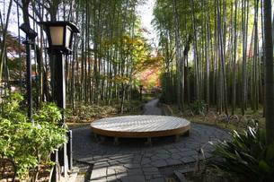 修善寺温泉の竹林の小径と紅葉の写真素材 [FYI04866063]