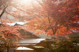 修善寺温泉の竹林の小径と紅葉の写真素材 [FYI04866067]