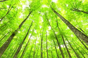 ブナの森の写真素材 [FYI04866419]