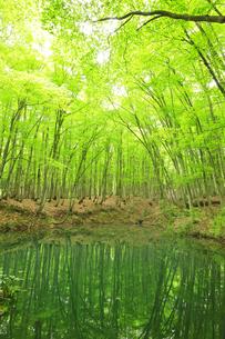 ブナの森と池の写真素材 [FYI04866421]