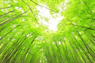 ブナの森と空の写真素材 [FYI04866422]
