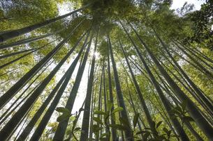 報国寺の竹林の写真素材 [FYI04866474]