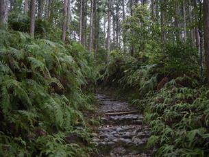 熊野古道の写真素材 [FYI04867298]