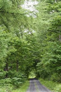 緑の森を抜ける砂利道の写真素材 [FYI04867412]