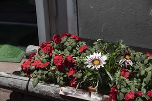 街角の寄せ植え花壇の写真素材 [FYI04867421]