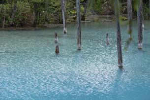 小波が綺麗な夏の青い池 美瑛町の写真素材 [FYI04867423]