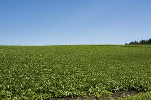 野菜畑と青空の写真素材 [FYI04867427]