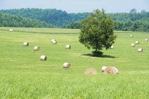 牧草ロールと緑の牧草畑の写真素材 [FYI04867437]