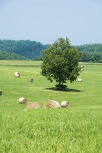 牧草ロールと緑の牧草畑の写真素材 [FYI04867438]