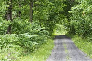 緑の森を抜ける砂利道の写真素材 [FYI04867439]