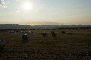 牧草ロールが広がる夕暮れの牧草畑の写真素材 [FYI04867440]