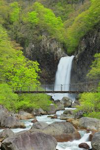 苗名滝に新緑と吊り橋の写真素材 [FYI04867557]