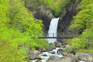 苗名滝に新緑と吊り橋の写真素材 [FYI04867559]