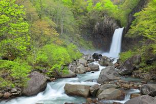 苗名滝と新緑の写真素材 [FYI04867565]