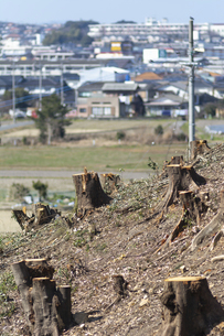 宅地開発のために伐採した木の切り株と街並みの写真素材 [FYI04867786]