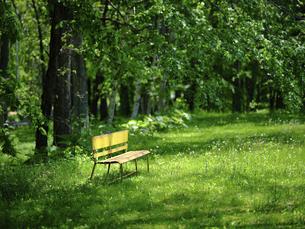 緑の森の黄色いベンチの写真素材 [FYI04868023]