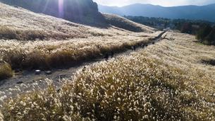 秋の仙石原すすき草原の空撮の写真素材 [FYI04868260]