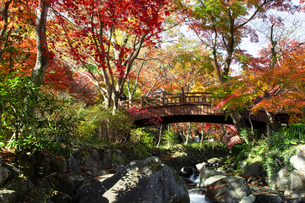 紅葉に彩られた熱海梅園の梅園五橋の写真素材 [FYI04868284]