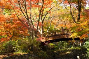紅葉に彩られた熱海梅園の梅園五橋の写真素材 [FYI04868287]
