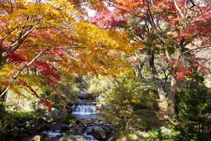 紅葉に彩られた熱海梅園の初川の写真素材 [FYI04868288]