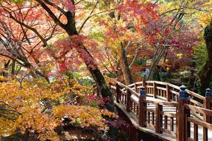紅葉に彩られた熱海梅園の梅園五橋の写真素材 [FYI04868292]