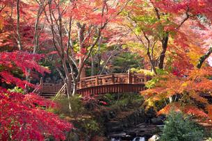 紅葉に彩られた熱海梅園の梅園五橋の写真素材 [FYI04868293]