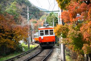 線路を走る箱根登山鉄道と紅葉の写真素材 [FYI04868312]