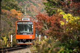 線路を走る箱根登山鉄道と紅葉の写真素材 [FYI04868314]
