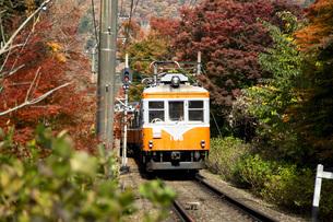 線路を走る箱根登山鉄道と紅葉の写真素材 [FYI04868316]