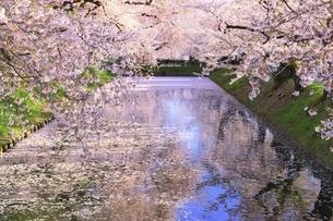 弘前公園の桜と花筏の写真素材 [FYI04868382]