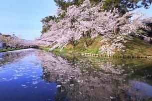 弘前公園の桜と花筏の写真素材 [FYI04868387]
