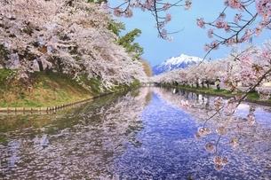 弘前公園の桜と花筏に冠雪の岩木山の写真素材 [FYI04868392]