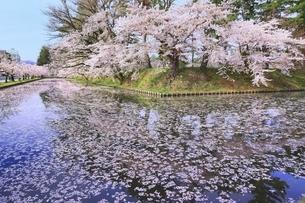 弘前公園の桜と花筏の写真素材 [FYI04868393]