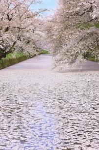 弘前公園の桜と花筏の写真素材 [FYI04868444]