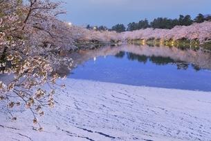 弘前公園 西濠の桜と花筏ライトアップの写真素材 [FYI04868468]