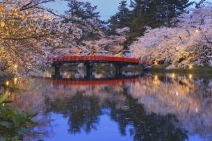 弘前公園 西濠の桜と春陽橋ライトアップの写真素材 [FYI04868471]