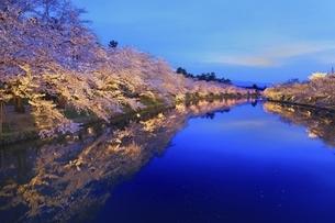 弘前公園 西濠の桜ライトアップの写真素材 [FYI04868480]