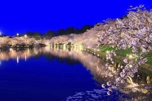 弘前公園 西濠の桜ライトアップの写真素材 [FYI04868489]