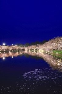 弘前公園 西濠の桜ライトアップの写真素材 [FYI04868501]