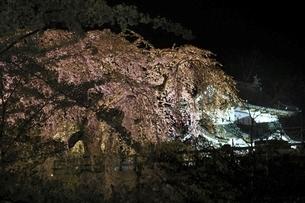下乗橋より望む弘前城天守と桜のライトアップの写真素材 [FYI04868505]