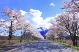岩手山と桜並木の写真素材 [FYI04868528]