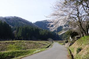 農道と日吉神社の桜の写真素材 [FYI04868542]