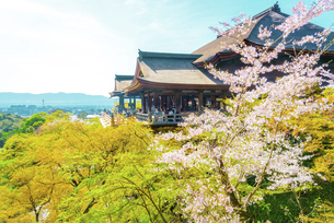 関西の風景 京都市 春の清水寺本堂の写真素材 [FYI04868985]