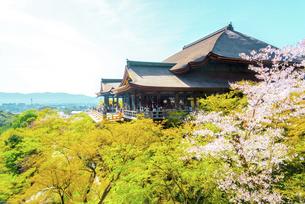関西の風景 京都市 春の清水寺本堂の写真素材 [FYI04868986]