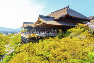 関西の風景 京都市 春の清水寺本堂の写真素材 [FYI04868987]