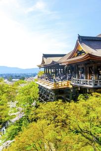 関西の風景 京都市 春の清水寺本堂の写真素材 [FYI04868988]