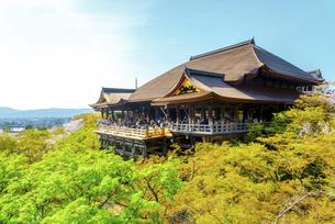 関西の風景 京都市 春の清水寺本堂の写真素材 [FYI04868989]