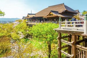 関西の風景 京都市 春の清水寺本堂の写真素材 [FYI04868990]