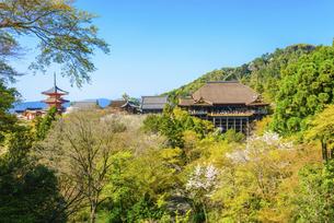関西の風景 京都市 春の清水寺景観の写真素材 [FYI04868991]